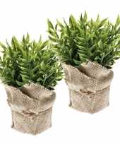 Hobby x kunstplanten muizendoorn kruiden groen jute pot