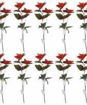Hobby x rode kerstster bloem 10159164
