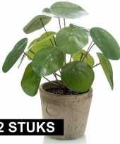 Hobby x stuks kunstplanten pannekoekplant pilea groen pot 10125174