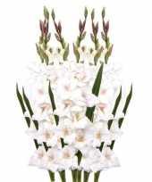 Hobby x witte gladiolen kunstbloemen takken 10114802
