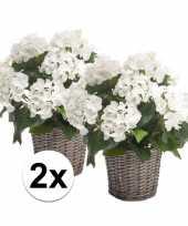 Hobby x witte hortensia kunstplant mand